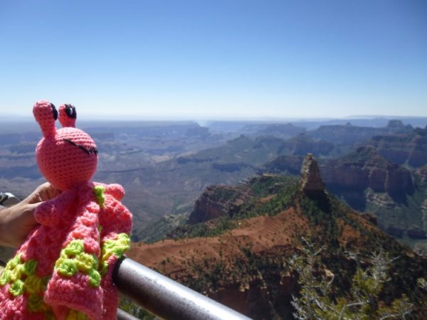 darleen-hopkins-Annie-the-Alien-enjoys-the-views-of-the-Grand-Canyon